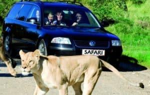legoland i safari