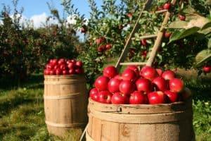 Dom Jabłka
